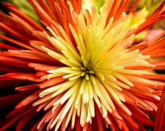 """Large Flower Art Print entitled """"Growth"""" and shot using a macro lens. Wall Decor, Photography."""