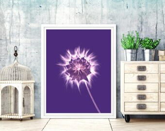 Dandelion pictures for print. dandelion pictures designs. dandelion colored flower for print. dandelion art prints desings. dandelion print