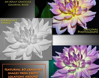 New Creations Coloring Book Series: FLOWERS