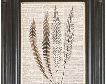 Fern feathers wall art on dictionary or music page COUPON SALE Dictionary art print Music print Digital print Wall decor No 2342