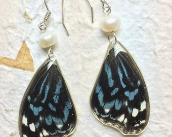 Blue Tiger Butterfly Wing Earrings on Sterling Silver Hooks plus Fresh Water Pearls
