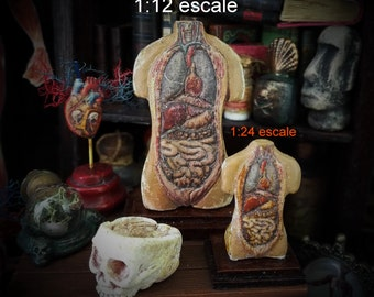 HUMAN DISSECTION  TORSO . Antique anatomical model. Medical study miniature for dollhouses 1/12 and 1/24  scale avaliable
