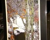 Winter Aspen - Matted Print 11 x 14