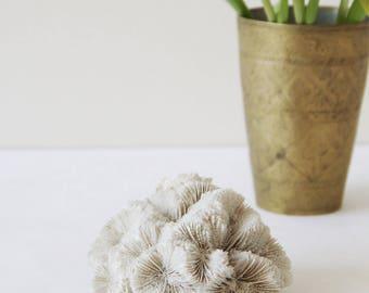 Antique Coral Specimen - Gorgeous Antique Cream Coral Piece - Boho Chic - Coffee Table Decor