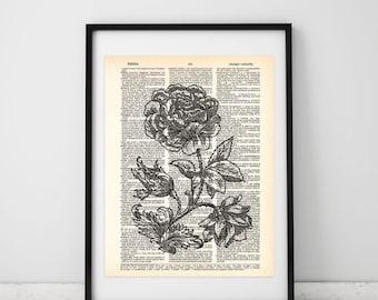 Rose Illustration prints, Vintage art prints, Flower prints, Antique Flower drawings, Victorian Style prints, Rose Dictionary print, #076