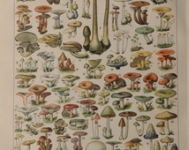 """1898. Antique MUSHROOMS print.Chromolithograph.116 years old print.Botany print.Antique French book plate.12.1x9.2""""-31x23cm.Vegetables print"""