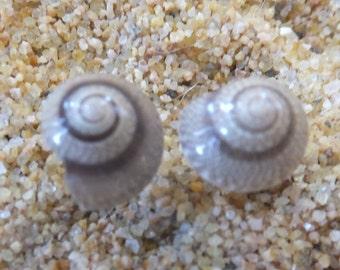 Fantastic Shell Stud Earrings