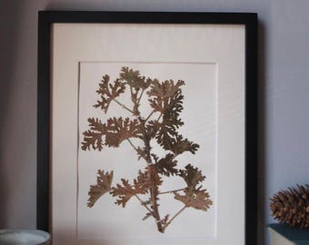 Herbarium - Real Pressed Botanical Specimen, Dried and Pressed Botanical Art for Home Decoration