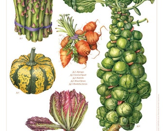 Vegetable Poster, Botanical Poster, Brussel Sprout & Friends, Vegetable Print, Wall Art, Watercolor Painting,