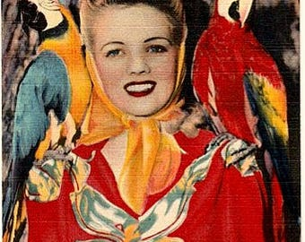 Vintage Florida Postcard - A Woman posing with Macaws at Parrot Jungle, Miami (Unused)