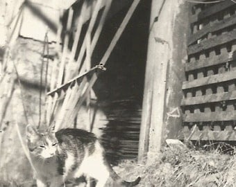 "Vintage Photo ""What's Up?"" Sleepy Kitty Cat Porch Trellis Found Vernacular Snapshot"