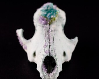 Blue Apatite & Peridot Semiprecious Rough Stones Crystallized Lilac Geode Real Taxidermy Coyote - Animal Skull