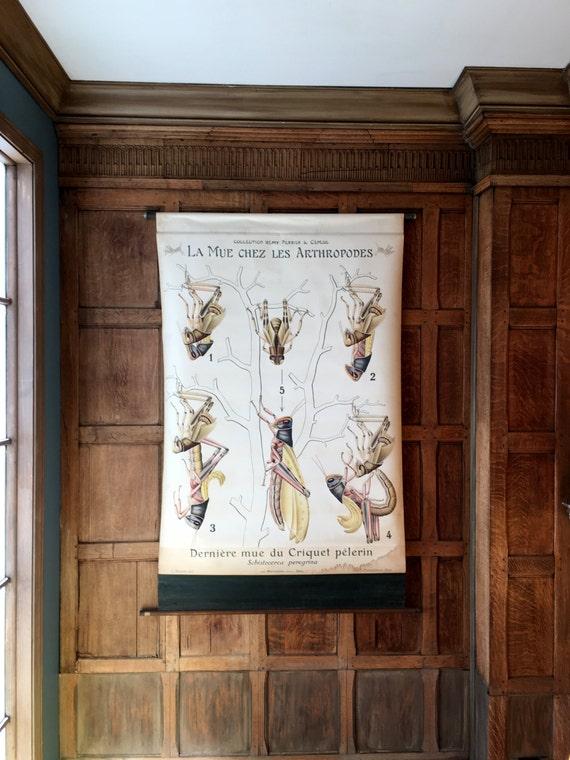 Antique Pull Down Chart, Grasshopper Molt Chart, La Mue Chez Les Arthropodes, Remy Perrier & Cepede, Scientific Illustration, Entomology