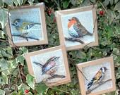 Bird card set of 4, birdwatchers cards, nature prints, garden birds collection, brown card set, English birds, papier mache art, small birds