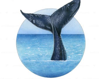 Whale Fluke Illustration Drawing - Fine Art Print