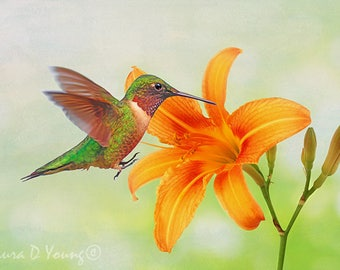 Ruby Throated Hummingbird, Bird Photography, Fine Art Photography, Bird Photo, Bird Wall Art, Bird Art, Hummingbird Print, Orange Day Lily