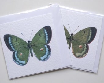 Butterfly cards, pack of 2