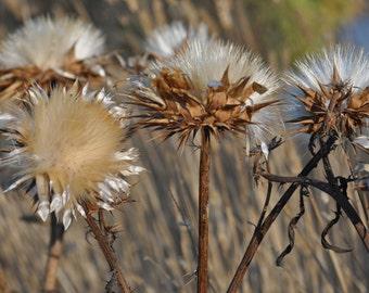 Artichoke flower #3