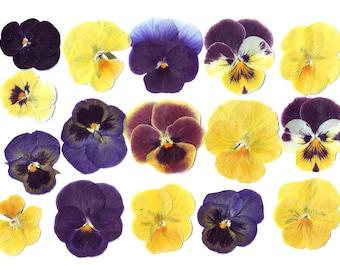 Violas pansies ( 40 pcs )Dried flowers.Pressed flowers.Real flowers.Herbarium.Yellow.Purple.For Oshibana, Cards, Scrapbooking, Decor,Jewelry