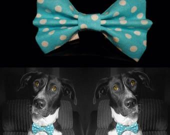 Dotty Dog Bow Tie - Blue