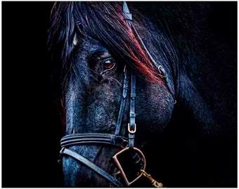 Equestrian Art, Horse Decor, horse painting, horse art, horse art print, horse photography, horse wall art, Fine Art, horse photo wall art,