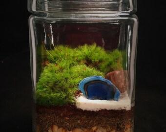 Blue Agate // Moss Terrarium // Desktop Terrarium // Terrarium Gift