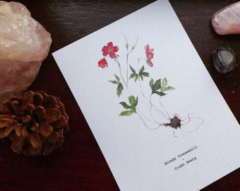 Burren Flora Series: Bloody Cranesbill A6 Illustration Print