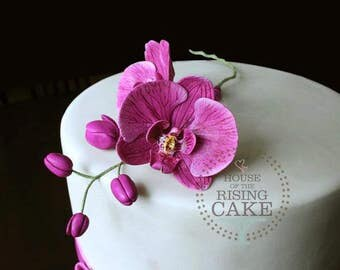 Gumpaste moth orchid and buds