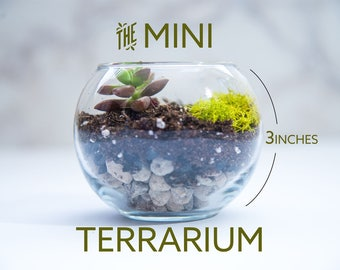 Succulent terrarium MINI, mini terrarium, diy terrarium, gardening gift, birthday gift, succulent gifts