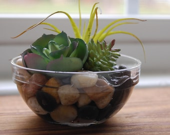 Assorted Succulents with Air Plant in Small Bowl with Artificial Water and Stones