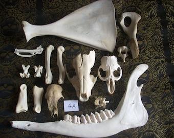 Small Animal Bone Assortment 4A