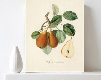 Printable Pear Print Botanical Art Print Vintage Botanical Illustration Pear Wall Art Antique Fruit Print Kitchen Art Decor Digital Download