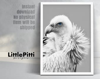 Vulture print, bird wall art, black white gray photo, bird of prey, gray home decor, wildlife print, animal wall art, bird printable