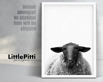 Farm animal print, sheep print, farmhouse decor, farm animal wall art, sheep art, sheep wall art, black sheep print, sheep room decor