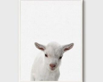 Lamb print, Nursery, Animal, Kids room, Modern art, Wall decor, Digital art, Printable,Digital poster ,Animal poster,Prints,Instant Download