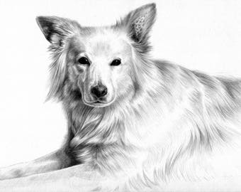 Professionally Drawn Custom Pet Portraits. Pencil Drawings. Personalised Gift.