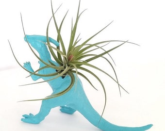 Air Plant / Turquoise Blue Dinosaur Planter  Budding Stricta  / Tillandsia / Desk Accessory / Home Decor / Office Decor