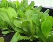 LETTUCE SEED - Garden Gate Farm Leaf Lettuce