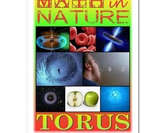 Math in Nature: Torus