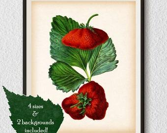 Printable digital art, Kitchen printables, Kitchen wall prints, Berry print, Strawberry, Antique wall art, Instant download print, Art, #62