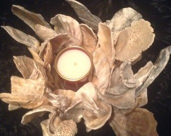 Oyster shells candleholder