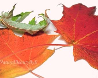 Nature photography, fall, autumn, bright leaves, wall art, nature, fine art, print, seasonal photography, 8x12