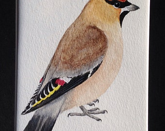 Bohemian Waxwing original watercolor painting 5x7 bird birds art painting watercolor