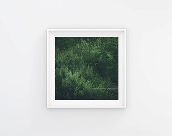 Nature Print, Fine Art Photography, Green Wall Decor, South of France, Square Nature Print