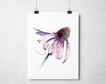 Original Print: Coneflower