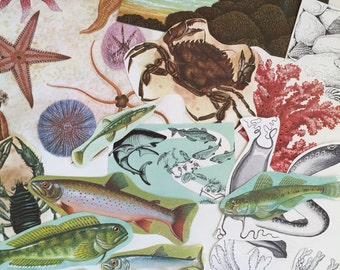 Under the Sea, Sealife and Starfish Ephemera Paper Pack. Vintage 1950s and 1960s paper for scrapbooking and journaling