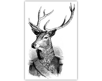 Admiral Deer Black White Canvas Print