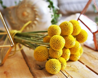 20 X dried billy buttons, dried Craspedia flowers, dried yellow ball flower, dried flower arrangement, wedding bouquet, craspedia flowers