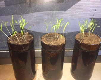 Planter | Organic Soil | Recycled Bottle