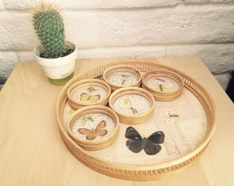 Vintage Dried Butterfly Coaster and Tray Set